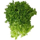 Picture of Endive
