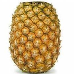 Picture of Pineapple - Topless XL