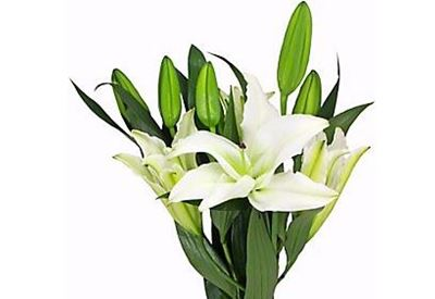 Picture of Lily - Oriental White Bunch