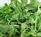 Picture of Snow Pea Leave 500G
