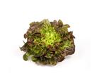 Picture of Lettuce - Mignonette
