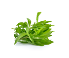 Picture of Herb - Tarragon