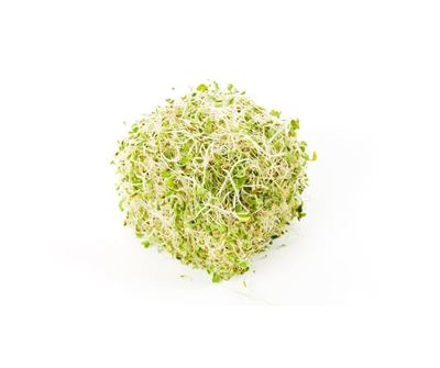 Picture of Sprout - Alfalfa
