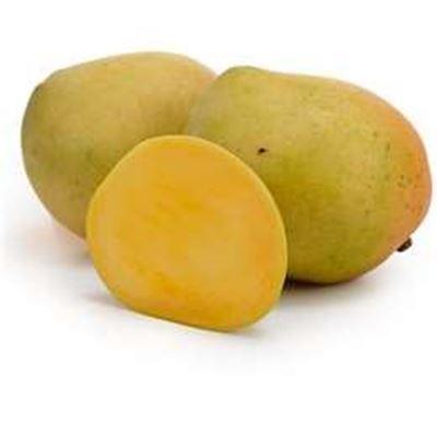 Picture of Mango - KP Medium Each