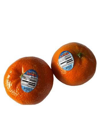 Picture of Mandarin - Halos
